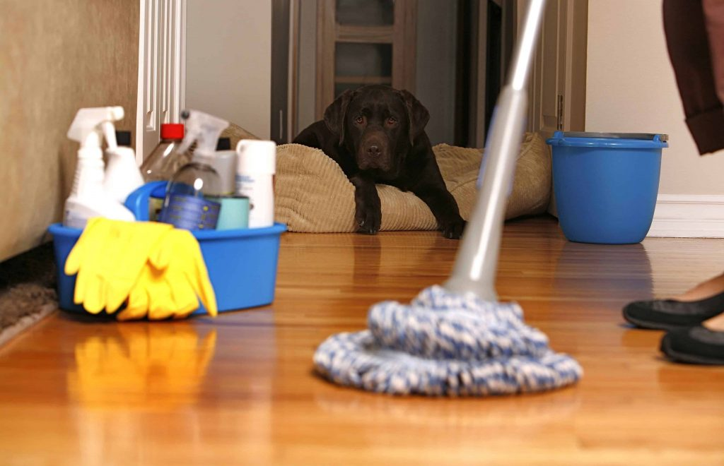 House cleaning hobart